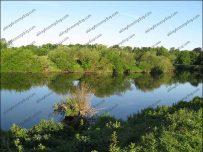 River Eden - Rickerby Park  - Carlisle