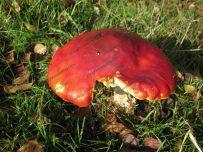 Mushroom, toadstool or fungi?