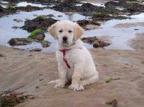 Rattray Head eco-hostel is near Peterhead in Aberdeenshire has a great beach nearby