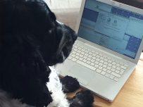 charlie at work