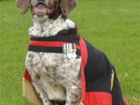 RAFP dog Buster