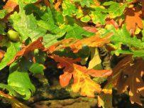 Autumn colours in Carlisle