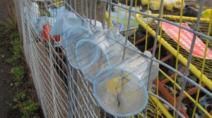 Plastic cups stuck in to mesh fence