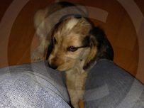 Rufus at 10 weeks