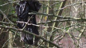 Dog dirt hangs in bag on a bush