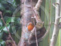 A robin perches on a garden tree