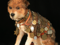Owney with his harness of mail tags